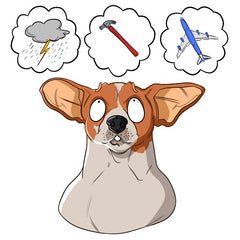 What Can Cause Anxiety | Innovet Pet