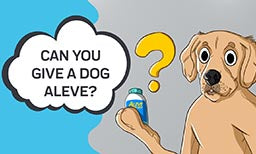 Can you Give a Dog Aleve?