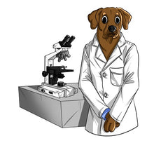 Canine Adenovirus and How CBD May Help | Innovet Pet