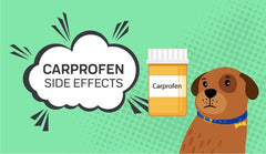 Carprofen Side Effects for Dogs