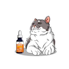 CBD Oil for Cats with Cancer