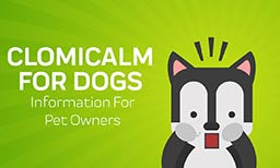 Clomicalm For Dogs: Information For Pet Owners