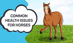 Common Health Issues For Horses