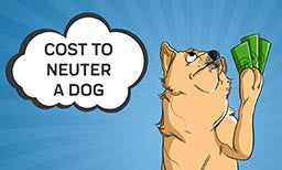 cost to neuter a dog