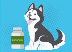 Dasuquin for Dogs | Innovet Pet