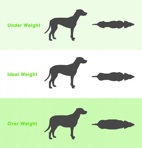 Puppy Growth Chart By Month Breed Size With Faq All You Need To Know