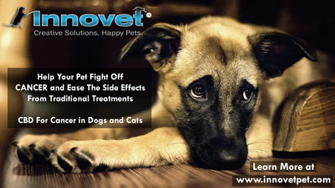 Help Your Pet Fight Off Cancer And Ease The Side Effects