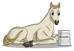 Horse Joint Supplements | Innovet Pet