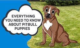Everything You Need to Know About Pitbull Puppies