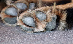 protecting your pets paws