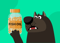 Fish Oil for Dogs: Safe or Not? | Innovet Pet