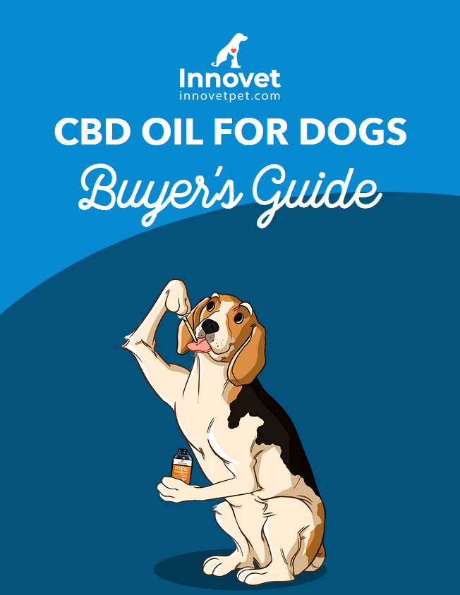 CBD oil for dogs Buyer guide