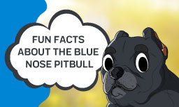 facts about blue nose pitbull