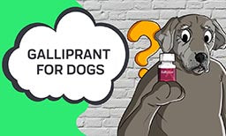 Galliprant For Dogs