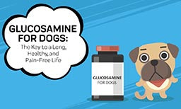 Glucosamine for Dogs: The Key to a Long, Healthy, and Pain-Free Life