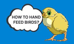 How To Hand Feed Birds?