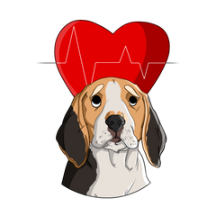 what is a normal dog heart rate