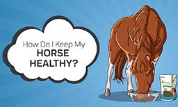 How to Keep Your Horse Healthy