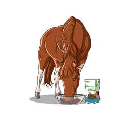 How Do I Keep My Horse Healthy? | Innovet Pet