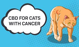 CBD for Cats with Cancer