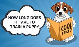 How Long Does It Take to Train a Puppy