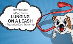 How to Stop a Dog From Lunging On a Leash - Reactive Dog Training