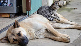 how do cats measure up to dogs in social awareness