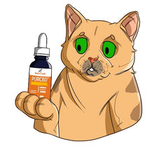 IBS In Cats and How CBD Can Help | Innovet Pet