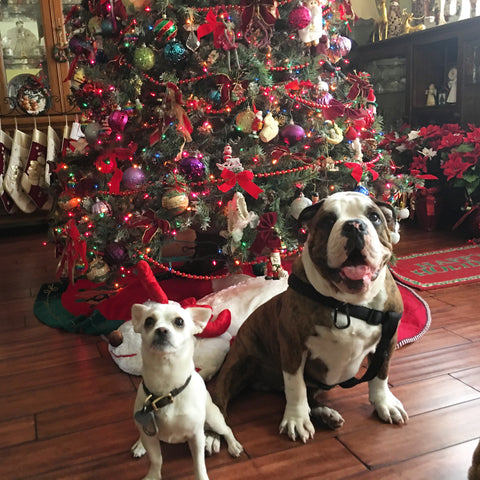 Toxic holiday foods to dogs