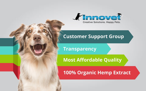 Innovet Pet: Reasons Why We Are The Number One Infographic