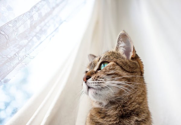 Is Your New Cat Stressed Out? CBD Oil May Help