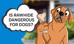 Is Rawhide Dangerous for Dogs