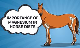 Importance of Magnesium in Horse Diets