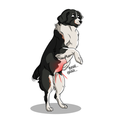 Clinical signs of Inflammatory Bowel Disease in dogs and cats | Innovet Pet