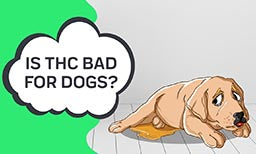 Is thc bad for dogs