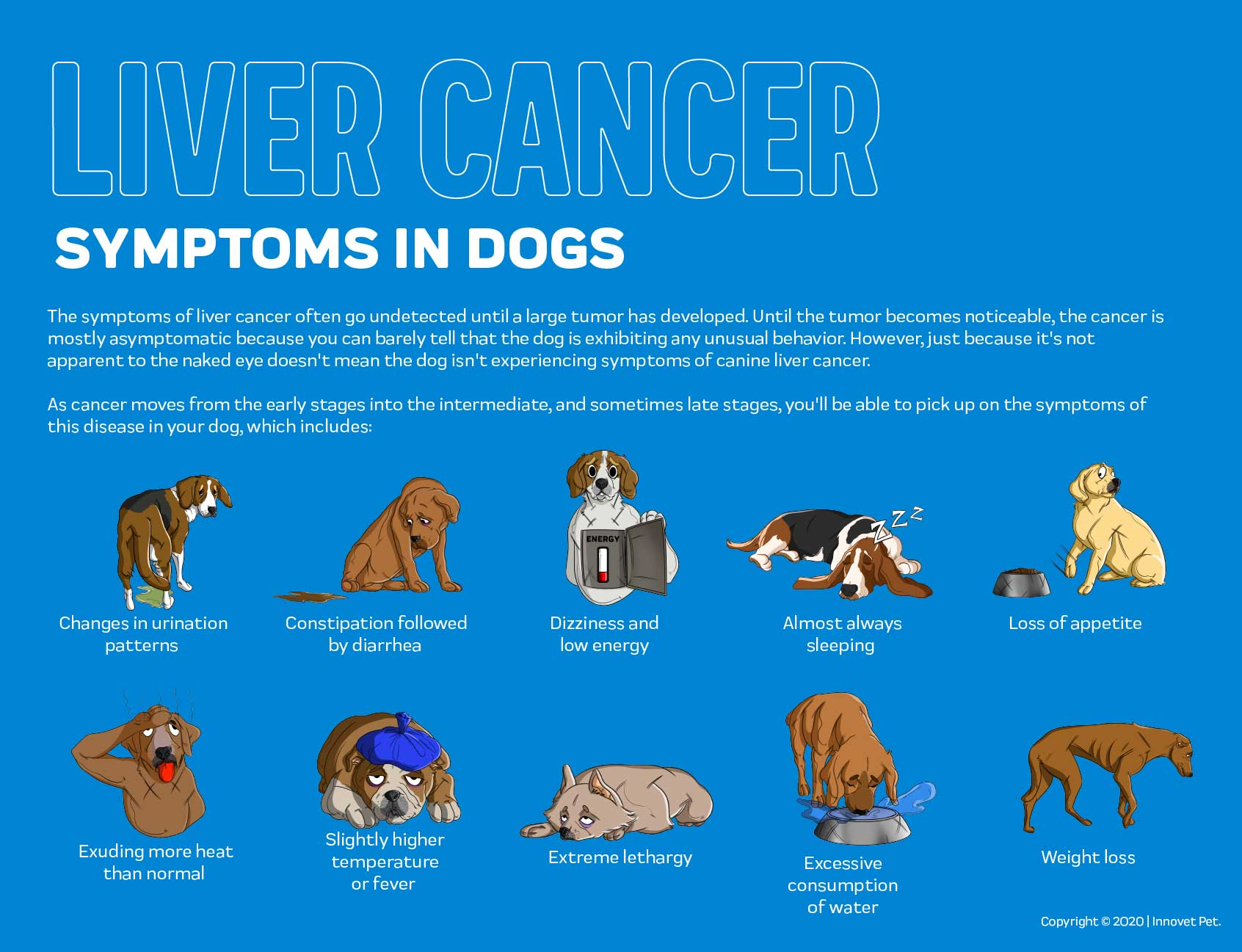 Liver Cancer in Dogs Symptoms