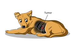 Caring for a Dog with Lung Cancer