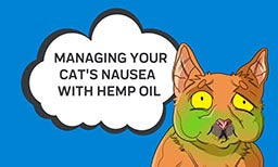 managing cats nausea with CBD oil