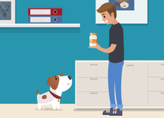 Melatonin for Dogs | Innovet Pet