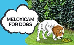 What is Meloxicam?