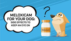 Meloxicam Side Effects for Dogs