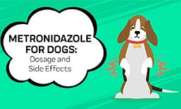 Metronidazole For Dogs: All You Need To Know