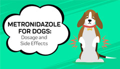 Metronidazole Side Effects for Dogs