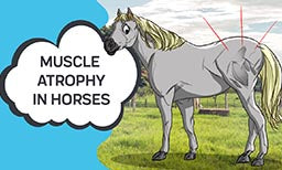 Muscle Atrophy in Horses
