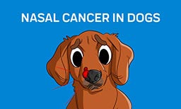 nasal cancer in dogs