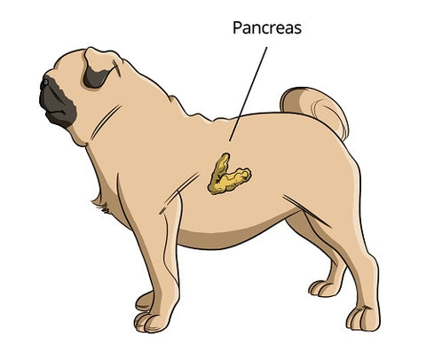 How to Diagnose Pancreatitis in Dogs