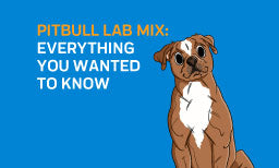 Pitbull Lab Mix: Everything You Wanted To Know
