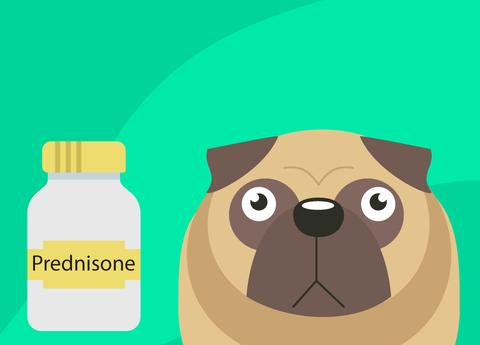 Prednisone For Dogs: A Word Of Caution — Innovet Pet