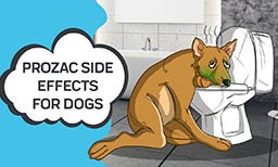 Prozac Side Effects for Dogs