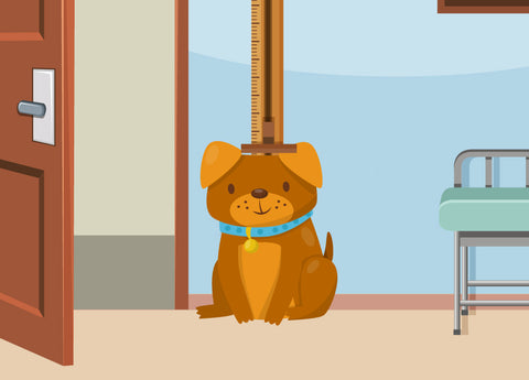 Puppy Growth Chart By Month Breed Size With Faq All You Need To